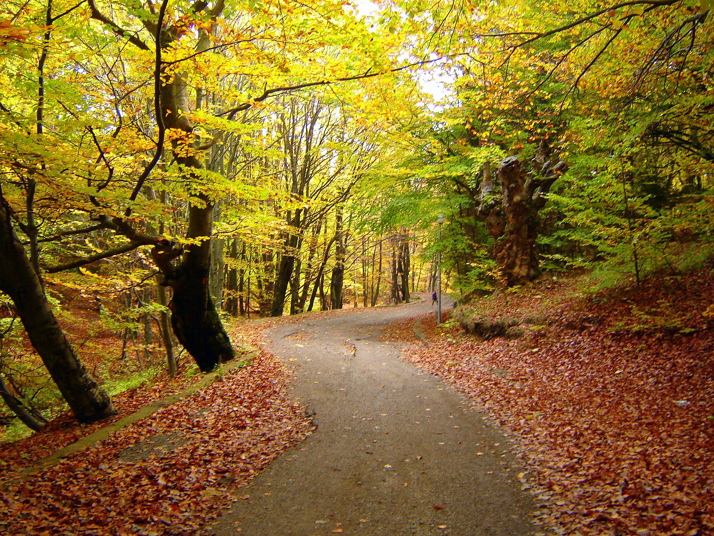 stockvault-autumn-walk99589